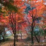 内浦山県民の森の紅葉