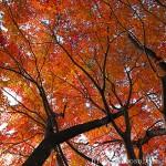 内浦山の紅葉